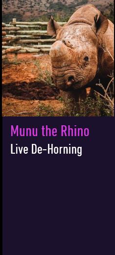 Munu the Rhino